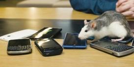 امواج تلفنهای همراه، آسیبی به انسان